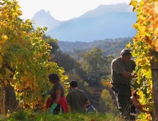 Vins du Jurançon en Béarn Pyrénées