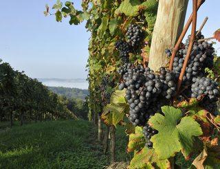 Madiran et Pacherenc du Vic Bilh, vins du Béarn Pyrénées