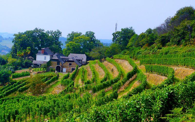 Vignes et campagne en Béarn Pyrénées