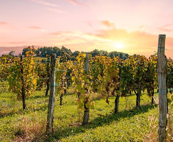 Gastronomie et vins en Aragon et en Béarn Pyrénées