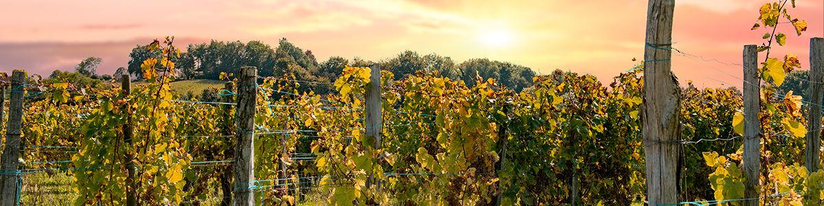 Vignobles de Jurancon Béarn